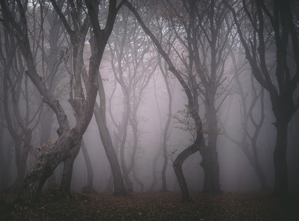 Hoia-Baciu Forest - scary and strangest places in the world